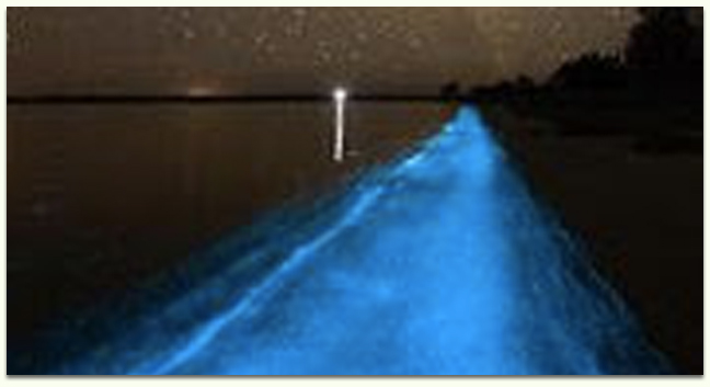 Bioluminescence Kayak tour near Orlando and Walt Disney World.